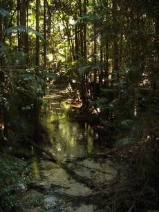 Eli Creek, Central Station, Fraser Island (image)