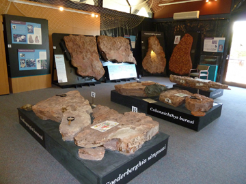 Fossil display room in The Age of Fishes Museum, Canowindra (image)