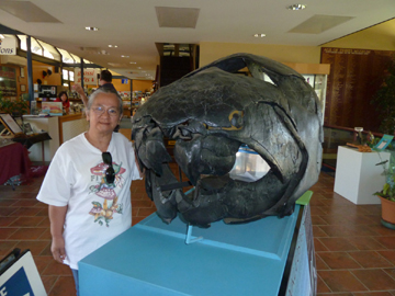 Dunkleosteus fossil, The Age of Fishes Museum (image)