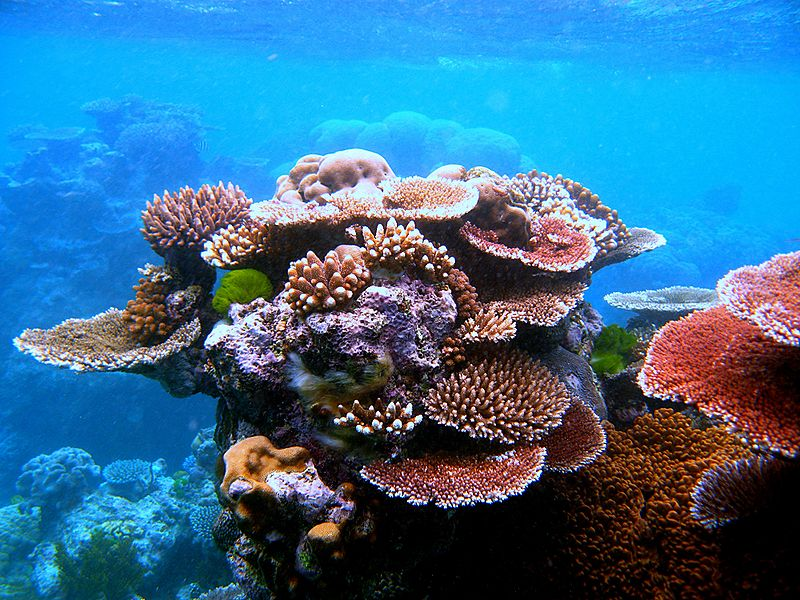 Great Barrier Reef corals (images)