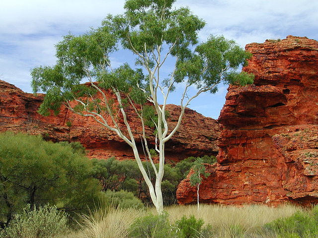 Kings Canyon, Northern Territory, Australia (image)