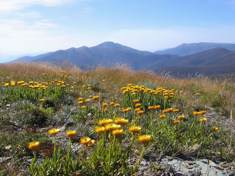 Mt Hotham and Mt Feathertop, Victorian Alps, Australia (image)
